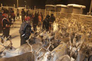 Sami Culture in Inari